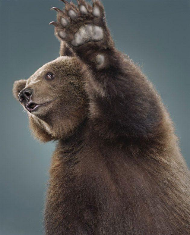 Смешные картинки медведь