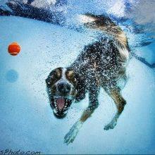 Собаки под водой. (11 фото)