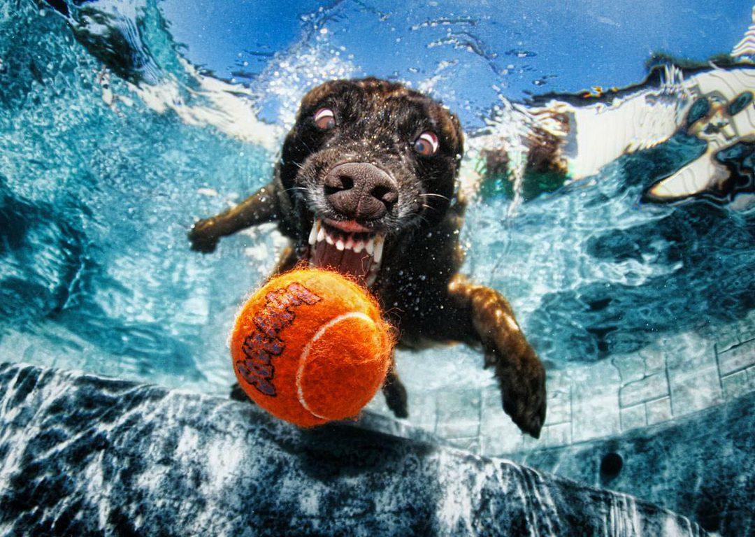 Underwate_dogs_6