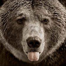 Прикольные медведи. (11 фото)