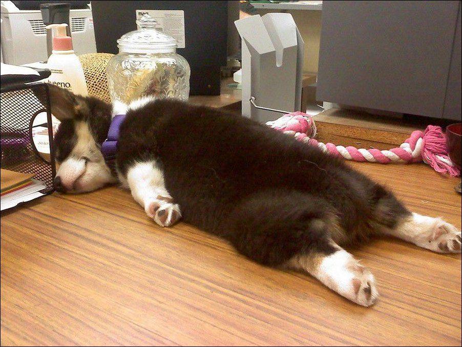 Прикол спящие девушки фото