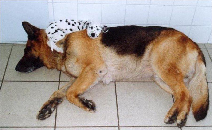 dog-sleeping-026