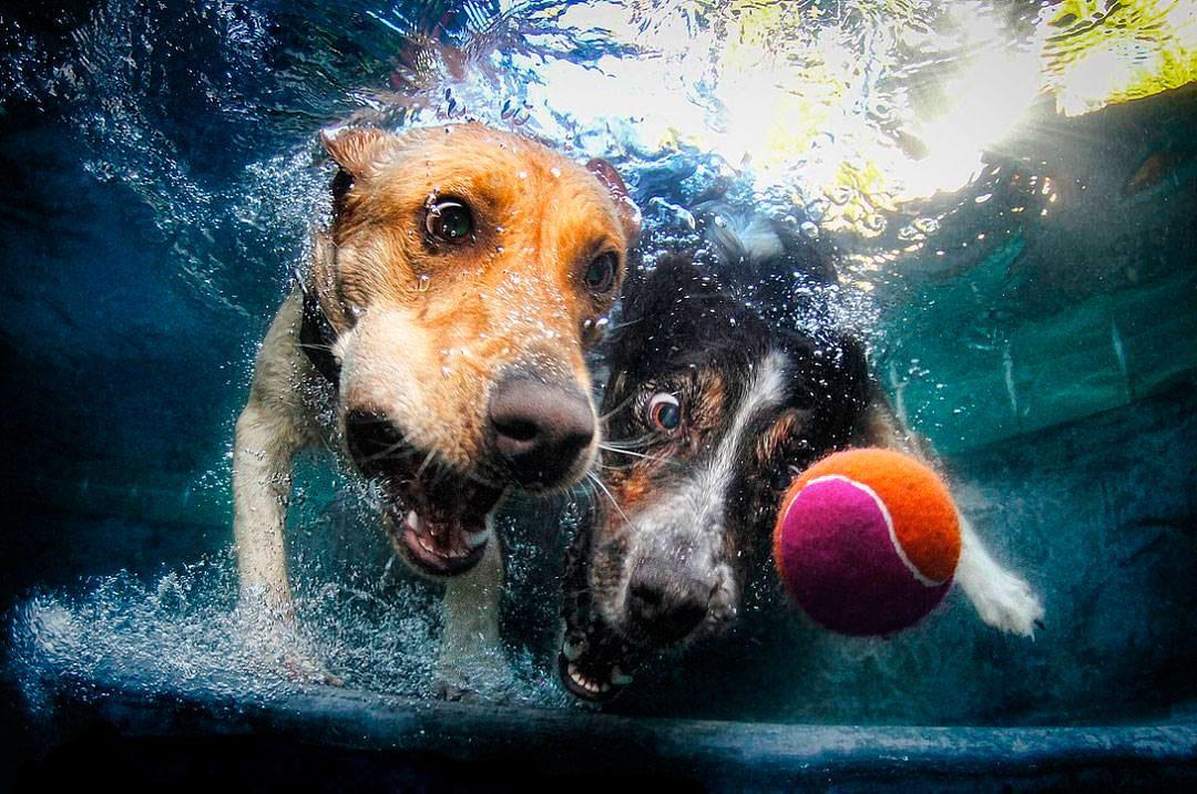 собаки-под-водой-продолжение-в-комментариях-песочница-живность-968302