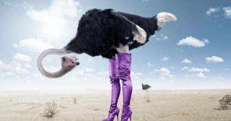 Приколы со страусами. (11 фото)