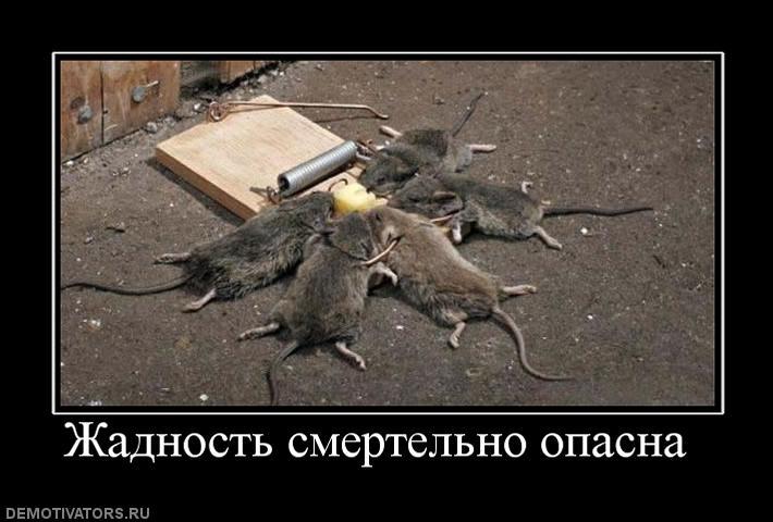 155764_zhadnost-smertelno-opasna-