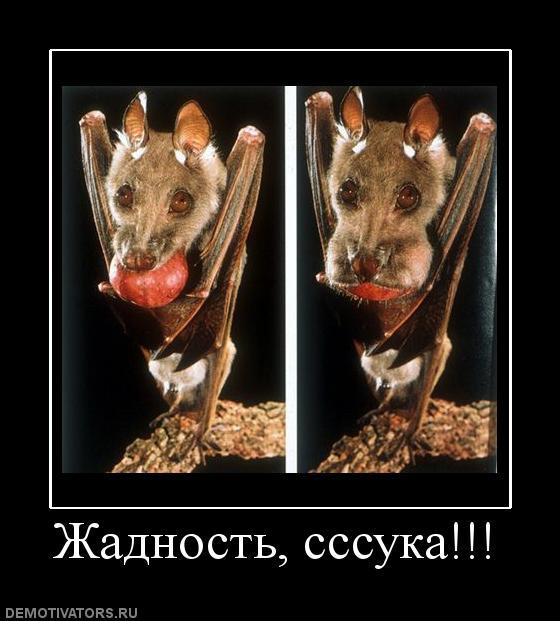 665910_zhadnost-sssuka