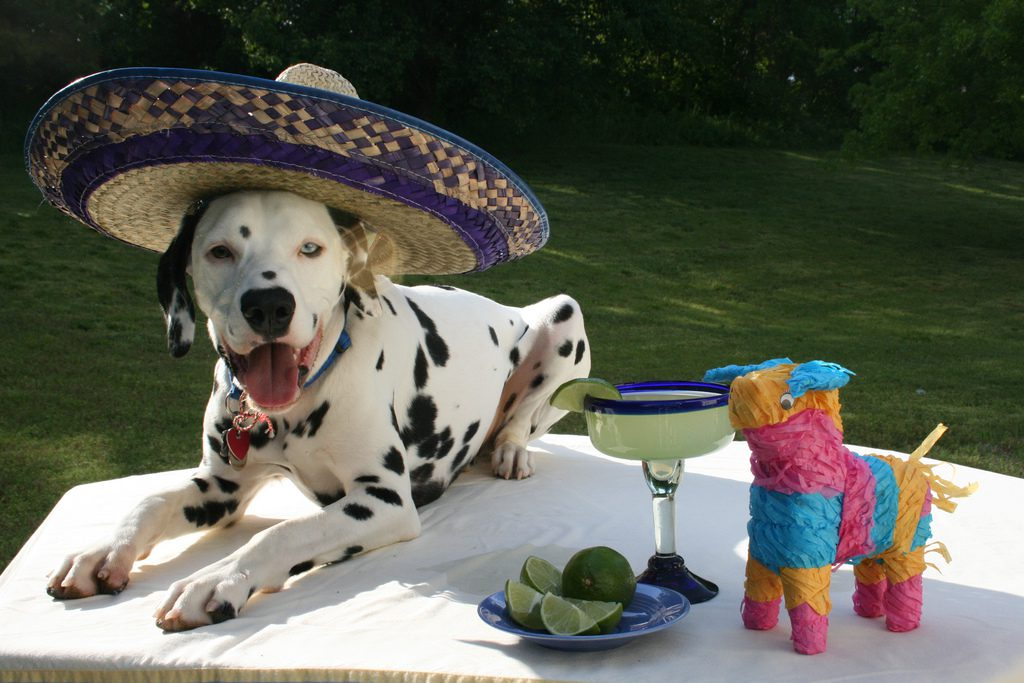 Далматинец в Мексике.