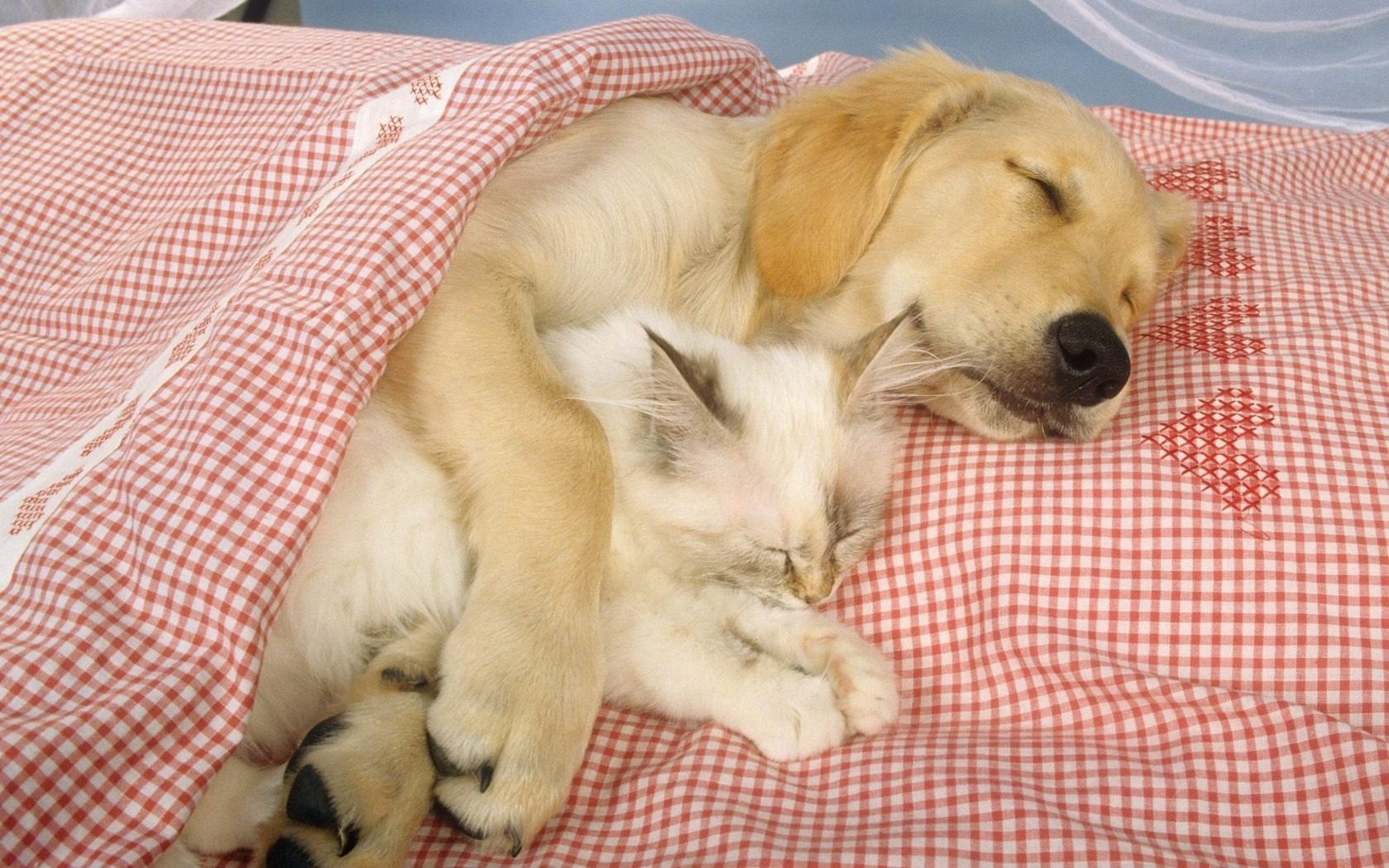Animals_Beasts_Sleeping_friends_023711_