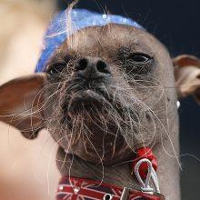 Смешные китайские хохлатые собаки (14 фото)