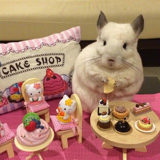 На отдыхе в магазине пироженных