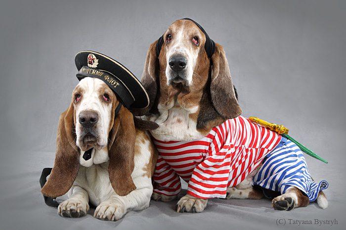 Бассет-хаунды в костюмах моряков.