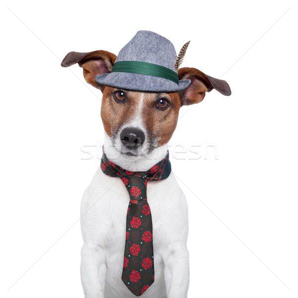 Джек-рассел-терьер в шляпе и галстуке.