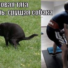 Приколы про фитнес и спортзал (24 фото)