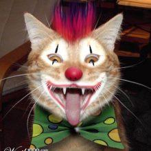 Приколы про клоунов. (12 фото)