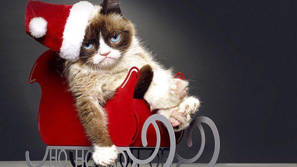Недовольный кот в новогодних санях