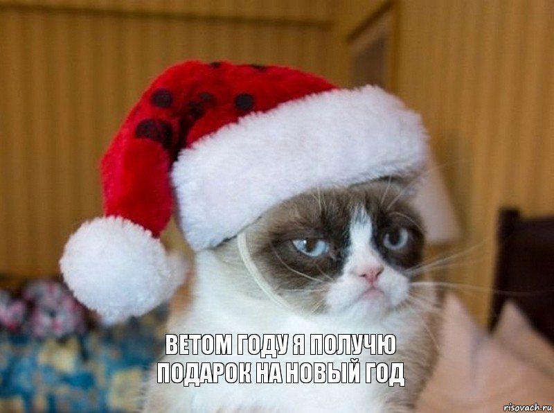 kot_68057345_orig_