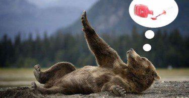 Медведица смотрит на свои ногти и мечтает о розовом лаке