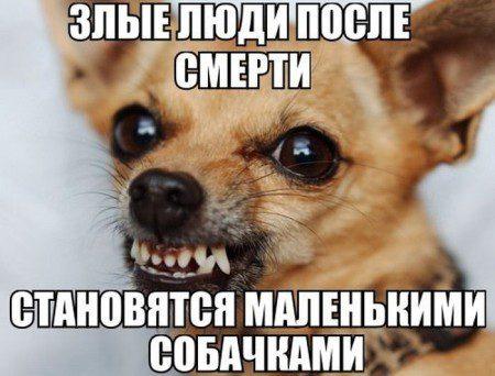 1423041433_kartinki-22