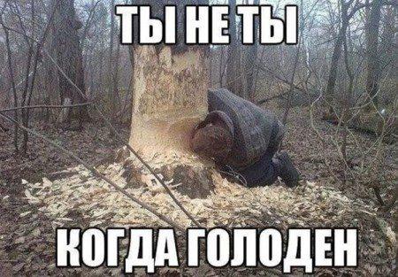 1462180925_podborka-prikolov-1_xaxa-net-ru