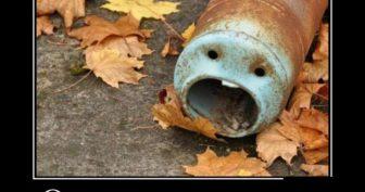 Прикольные картинки про осень (25 фото)