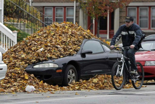 Убрали лишние листья