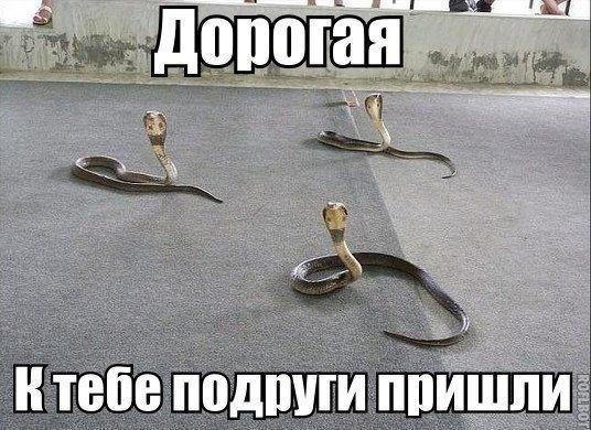 dorogaya-k-tebe-podrugi-prishli-17-11-2015-open