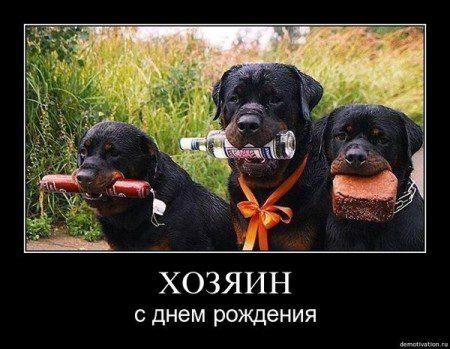 prikolnyie-pozdravleniya-s-dnem-rozhdeniya5
