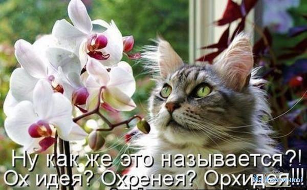 1253307530_foto-prikolnyh-kotov-koshek-5