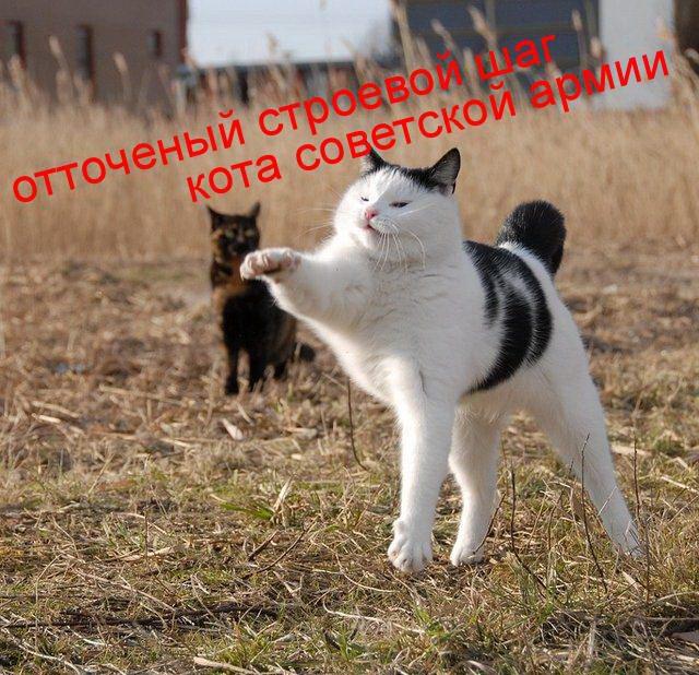 Прикольные картинки котов с прикольными надписями