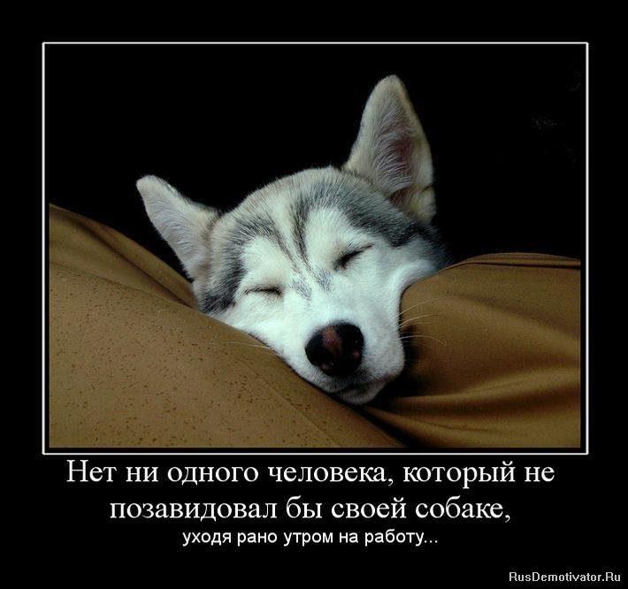 1264961685_327821_net-ni-odnogo-cheloveka-kotoryij-ne-pozavidoval-byi-svoej-sobake