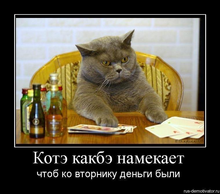 1281800592_256600_kote-kakbe-namekaet