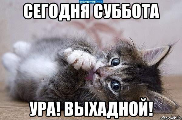 130224620_5644427_kote_45223032_orig_