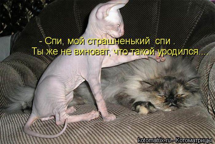 1302339042_kotomatrix_21