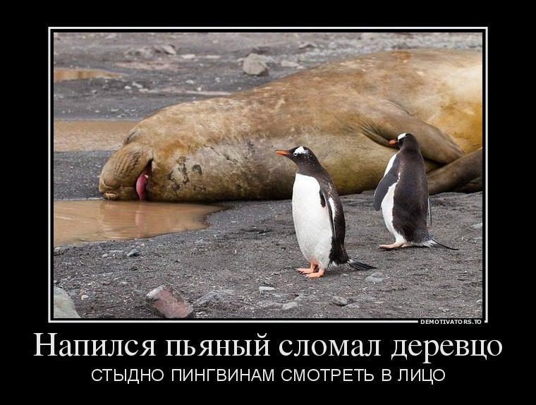 13179354_napilsya-pyanyij-slomal-derevtso