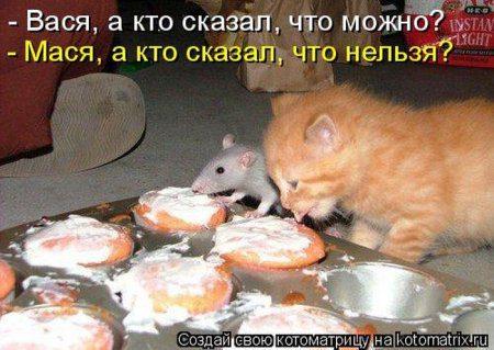 1332076682_kotomatrix_01