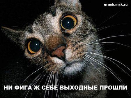 1341930212_prikolnie_kartinki_pro_raboty_62_799-17
