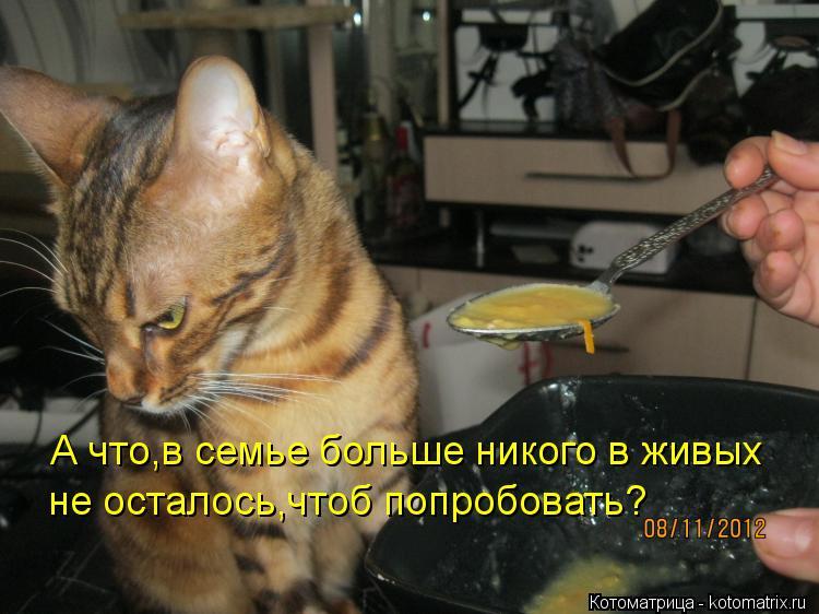1358936726_kotomatritsa_u
