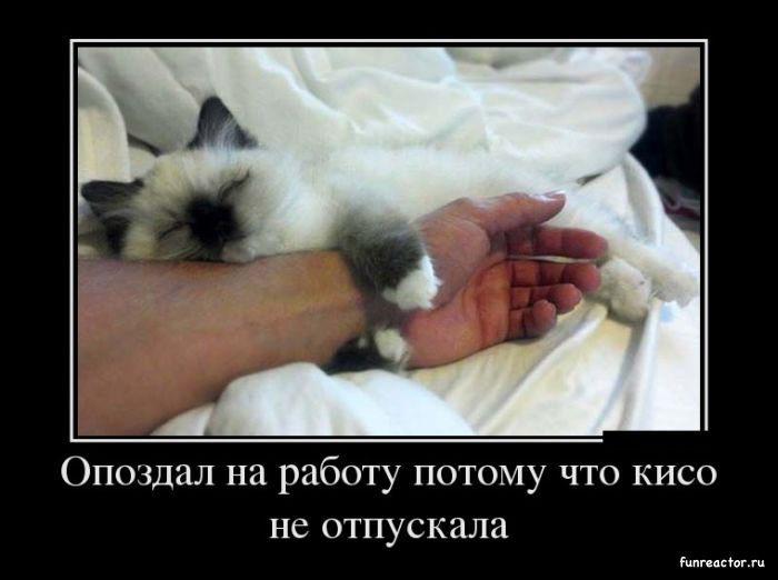 1362599135_1362125432_demotivatory_27