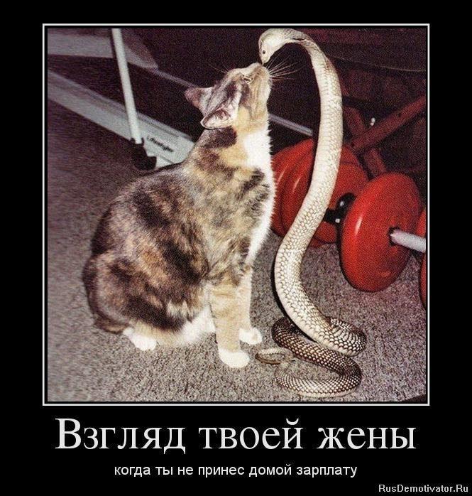 1365069269_45970141_vzglyad-tvoej-zhenyi