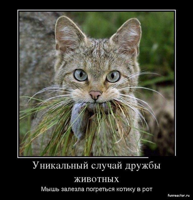 1366211848_1366179971_demotivatory_07