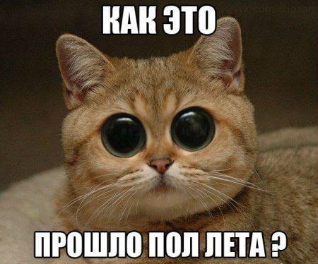 1373957972_0juij_udrni