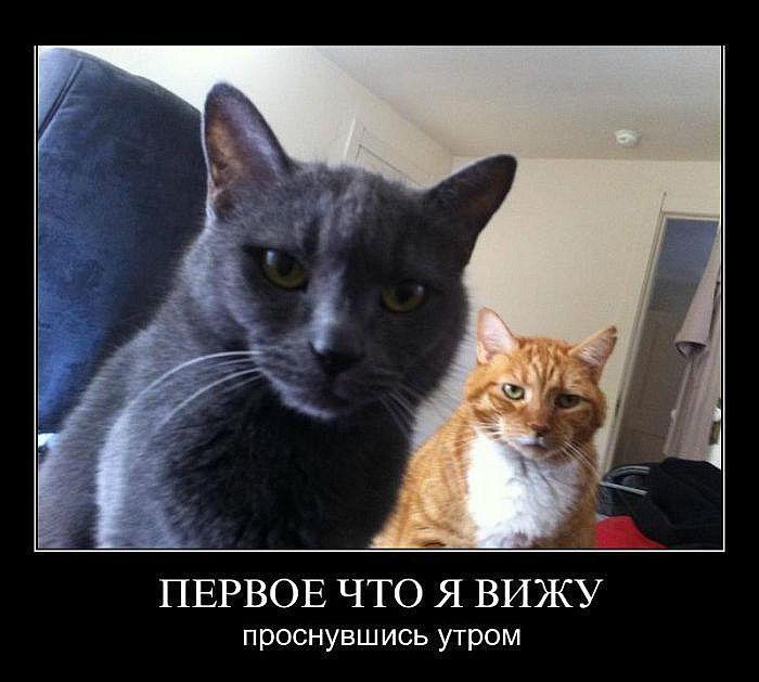 1412749128_sbornik-demotivacionnyh-prikolov-28