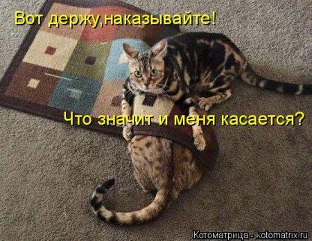 1442117819_kotomatritsa_f