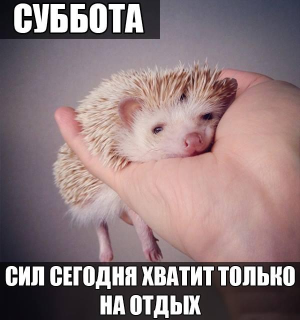 201405310027-subbota-sil-segodnya-hvatit-tolko-na-otdyh-kashamalasha-com