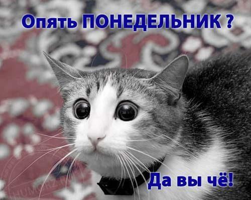 Фото картинки животных красивые