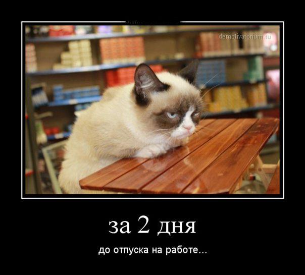 216872_4700b078_216dac1ce6783de78c3a9bb0b7276002_8