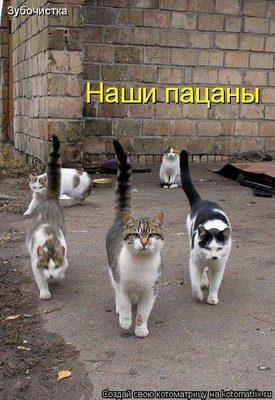 40460585_1236021886_3kiski_kotuy1