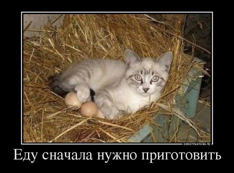 5967902_edu-snachala-nuzhno-prigotovit