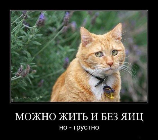 659151-2010-11-16-08-25-23-bomz-org-lol__prikol_jizn_prodoljaetsya