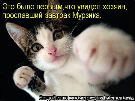 84785523_prikolnuye_foto_kotov_1